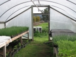 From greenhouse to field