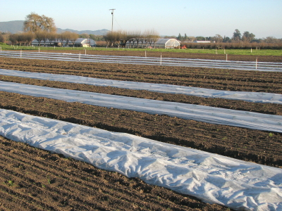 Covered beds and open ground