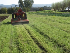 Mowing the carrots(?!) and the weeds.