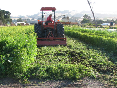 Paul mows down a summer cover crop on June 13th.