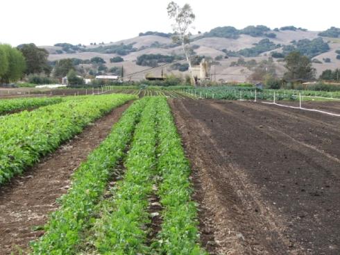 Rows of salad ingredients