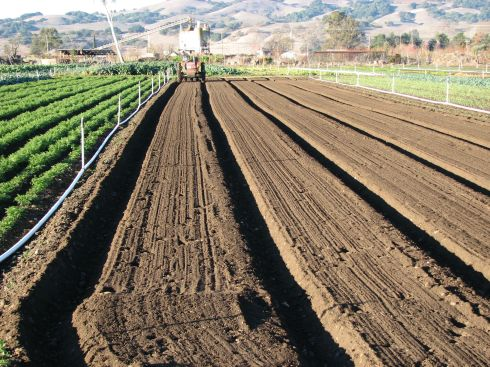These beds will grow us carrots ready in the spring.