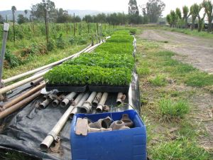 Transplants and irrigation supplies