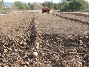 "Rocky soils are being ""crushed""."
