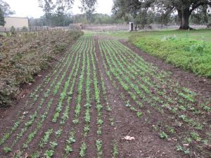 Cover crop has been planted wherever possible.